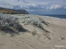 Nesting beaches